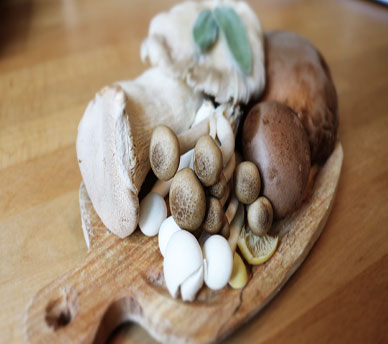 Essiccare i Funghi: Essiccatore vs Metodo tradizionale
